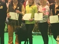Crufts-working-gundog-cert
