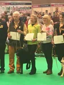 Crufts working gundog cert
